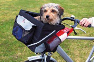 Miglior cesto bici per cane: dimensioni, materiali e caratteristiche