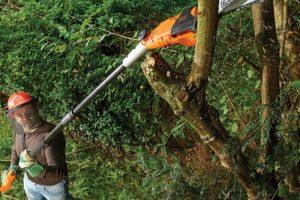 Miglior motosega telescopica: ecco quale scegliere per tagliare arbusti e alberi molto alti