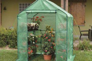 Piccola serra domestica per piante