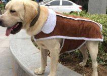 Miglior cappotto invernale per cani
