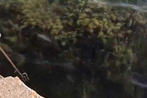 Pesca con fiocina