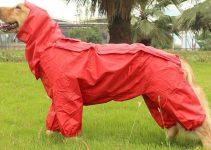 Miglior impermeabile per cani: Opinioni e prezzi dei migliori modelli
