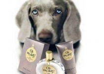 Profumo con vitamine per cani