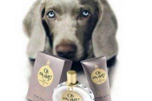 Cerchi un buon profumo per cani magari sanificante? Ecco i migliori