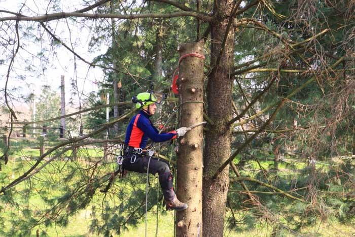Migliori ramponi per tree climbing