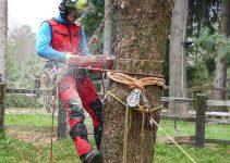 Migliori ramponi per salire su alberi