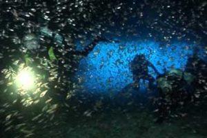 Torcia per immersioni subacque