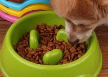 Ciotola per rallentare il pasto dei cani