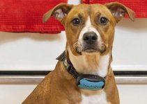 Collare elettrico a ultrasuoni per cani