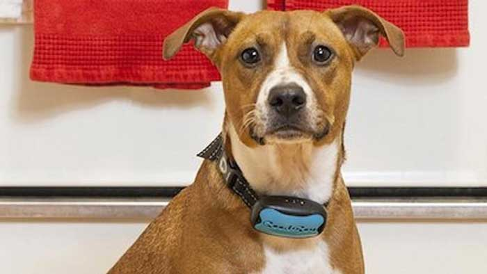Schema Elettrico Ultrasuoni Per Cani : Emmi pet spazzolino a ultrasuoni per cani italiano