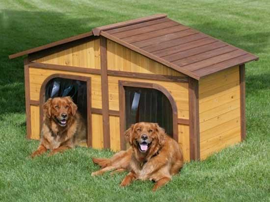 Cucce Per Cani Da Esterno In Plastica.Cuccia Per Cani Da Interno E Da Esterno I Migliori Modelli Qualita