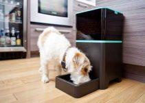 Mangiatoia automatica per cani