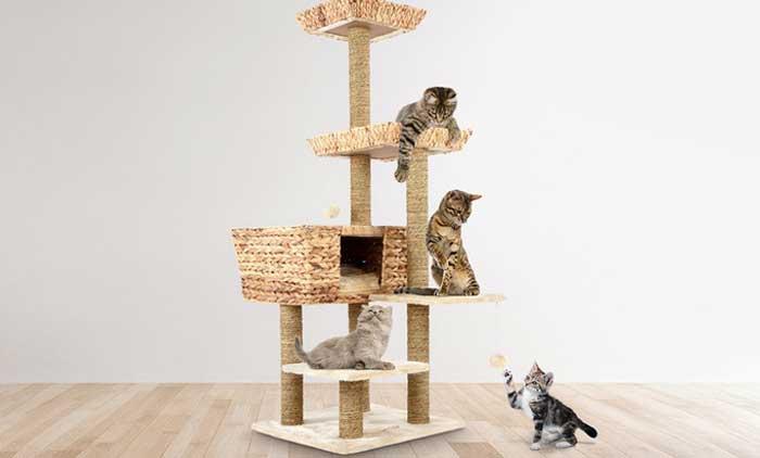 trespolo per gatti grandi