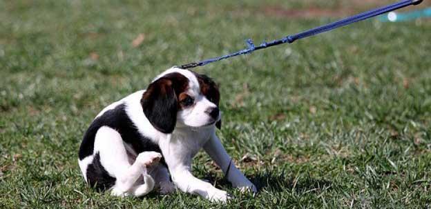 Quali sono i migliori guinzagli per cani classifica top5 for Marsupio per cani di piccola taglia