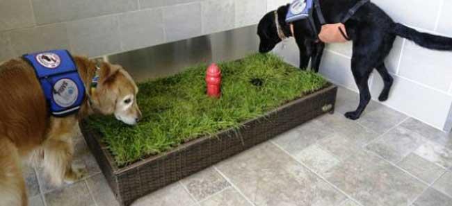 Lettiera con prato per cani maschi