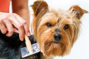 Spazzole per cani: Migliori modelli a confronto con opinioni e prezzi