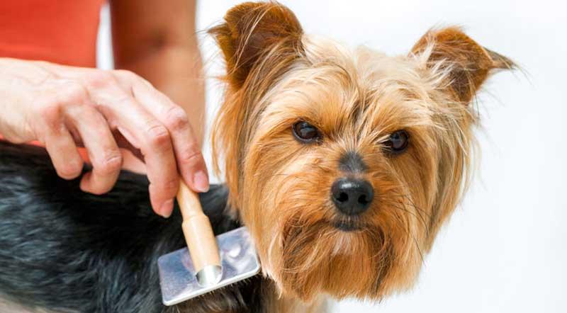 Schema Elettrico Ultrasuoni Per Cani : Repellente ad ultrasuoni voss sonic dissuasore per gatti e