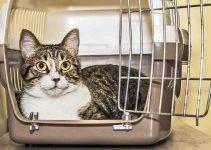 Trasportino in plastica per gatti
