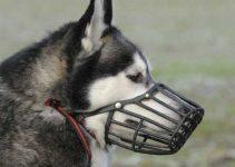 Museruola per cani di grossa taglia