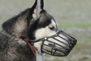 Le migliori museruole per cani: Confronto dei modelli per piccole e grosse taglie