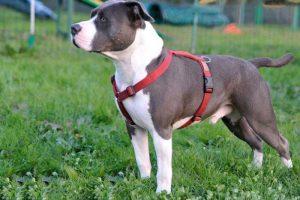 Pettorina per cani comoda e sicura? Tipologie, marche e modelli