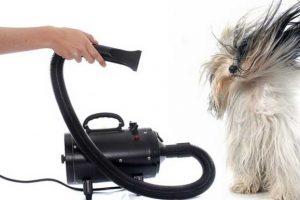 Asciugare il cane col Phon per cani