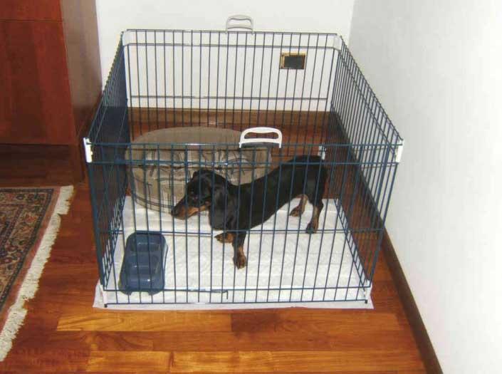 Recinto per cani da interno o box da esterno guida all for Recinti per cuccioli di cane in casa