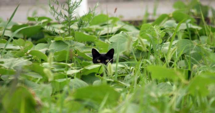 Allontanare i gatti randagi col repellente