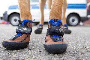Scarpette antiscivolo per cani