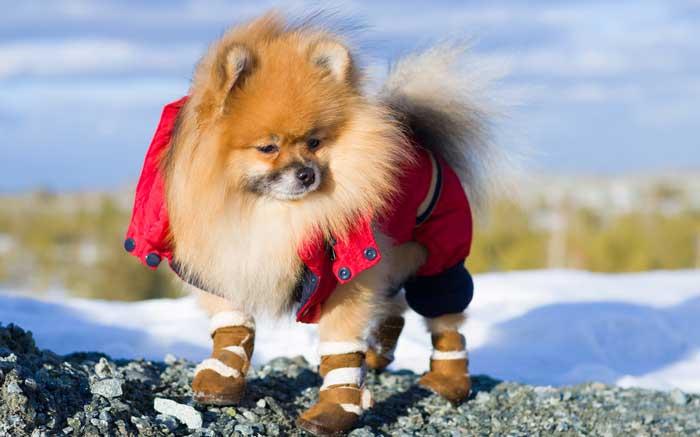 Scarpette per cani  sono veramente utili  Ecco i 5 migliori modelli ... 9996e3744fb