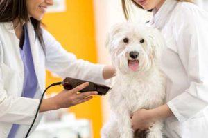 Tosatrice per cani: Migliori modelli professionali ed economici