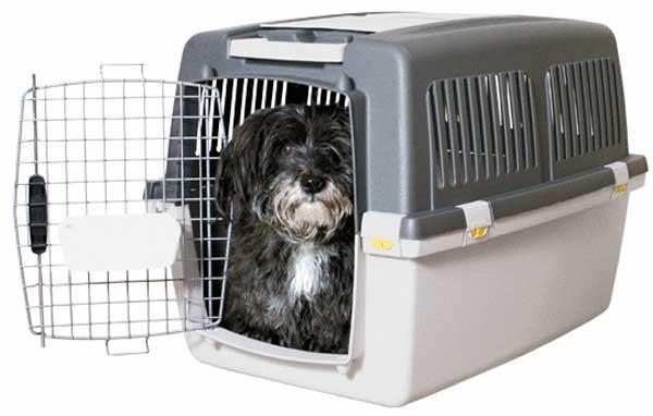 Trasportino Per Cani Di Taglia Grande Media O Piccola I Migliori