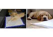 Traverse igieniche per cani