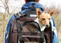 zainetto per cani