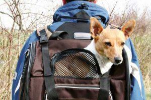 Cerchi una borsa o marsupio per cani? Migliori modelli a confronto