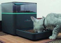 Dispenser di croccantini per gatto