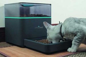 Dispenser di croccantini per gatto