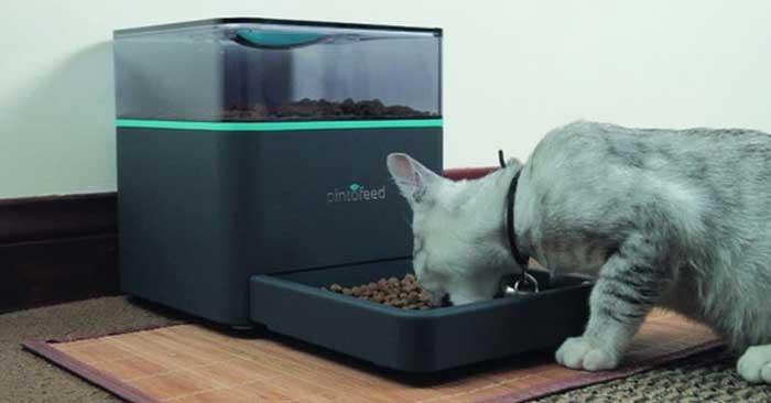 Come funziona il dispenser di cibo per gatti ecco i 5 for Miglior cibo per gatti