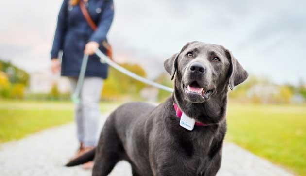 Collare gps per cani con geolocalizzazione