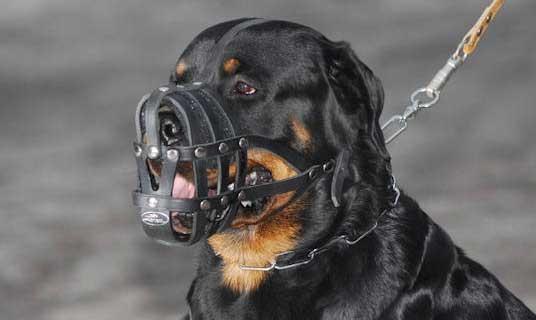 MKSI Museruole per Cani per Cani di Taglia Piccola e Grande Museruole per Cani Piccoli con Tracolla Regolabile Abbaiare e Masticare 4 PCS Museruola per Cani in Poliestere Impedisce di Mordere