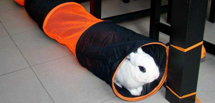 Gioco per conigli nani
