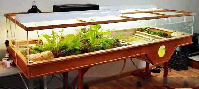 Piscina per tartarughe d acqua per cui abbiamo realizzato for Vaschette tartarughe