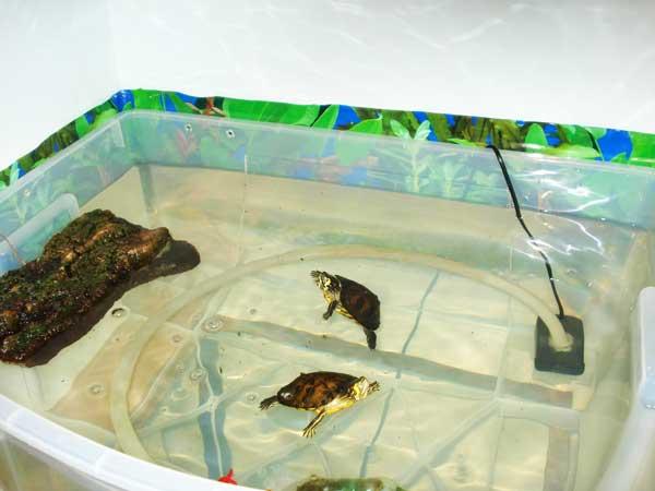Vasca Da Esterno Per Tartarughe : Acquario per tartarughe d acqua dolce guida all acquisto con