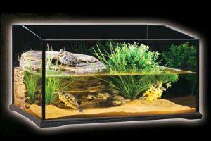 Acquario in vetro per tartarughe