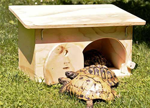 Casette per tartarughe di terra opinioni e prezzi dei for Casette per tartarughe