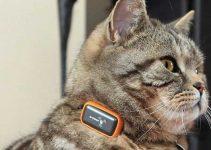 Collare con Gps per gatti