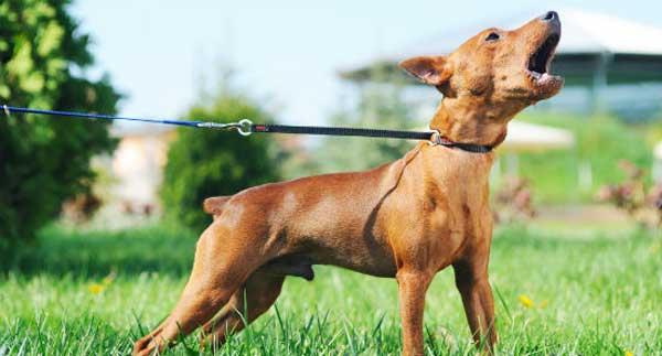 Catena scorrevole per cani