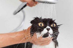 Shampoo per gatti e gattini