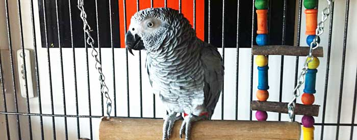Voliera per pappagalli