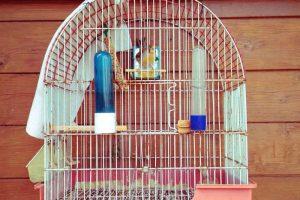Miglior gabbia per uccelli